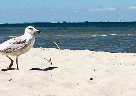 Möwe am Strand